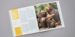 cover guide animaux, éditeur Creaguide, Choix graphique, typographie, couleur jaune.