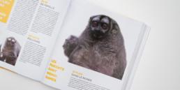 cover guide animaux, édition activité et loisirs en Suisse romande, thème: parc et zoo, photo singe de nuit