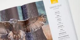 cover guide animaux, édition activité et loisirs en Suisse romande, Fiche info et photo Grand-Duc d'Europe.