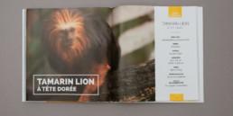 guide graphisme, mise en page livre, présentation du Tamarin lion à tête dorée, photographie et fiche informative
