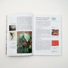Atelier de graphisme Zaniah, edition Attinger, mise en page