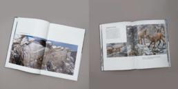 Mise en page texte et photographies